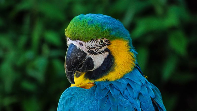 Do you believe, Parrot speak to human ?
